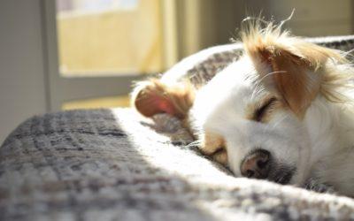 La Tos de las Perreras, ¡que no te quite el sueño!