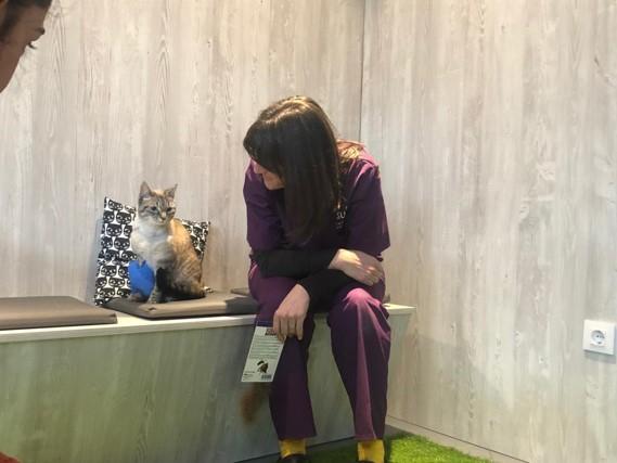 Mi gato no quiere ir al veterinario