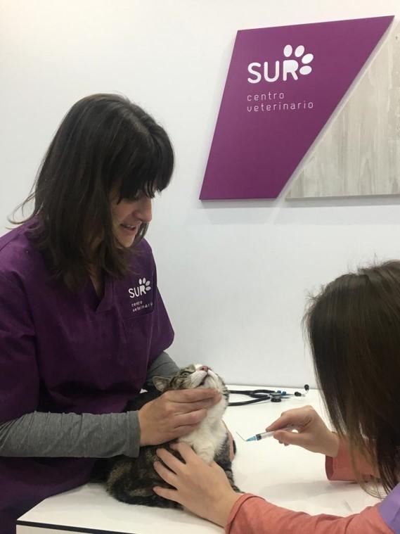 Medicina felina en centro veterinario sur