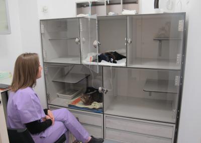 Hospitalización Felina del centro Veterinario sur