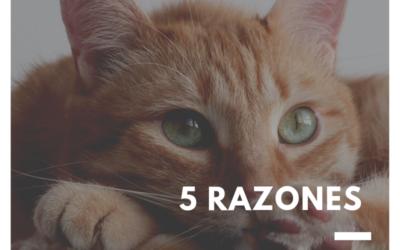 5 Razones para llevar a tu gato al veterinario