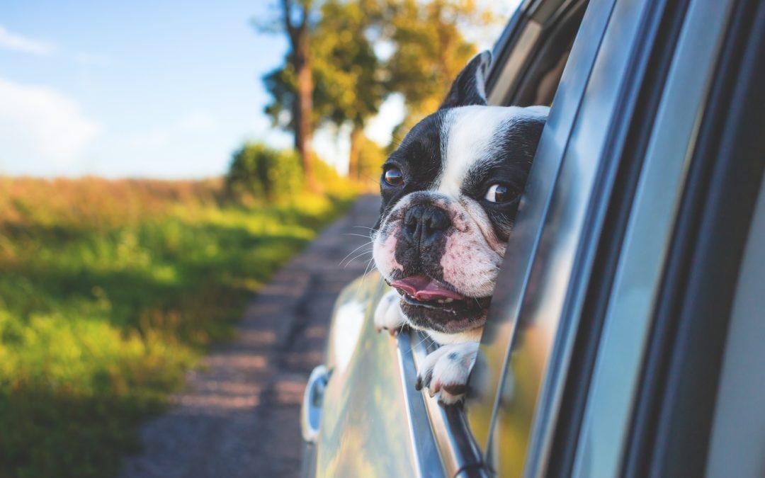 Este año, ¡Viajo con mi Perro!