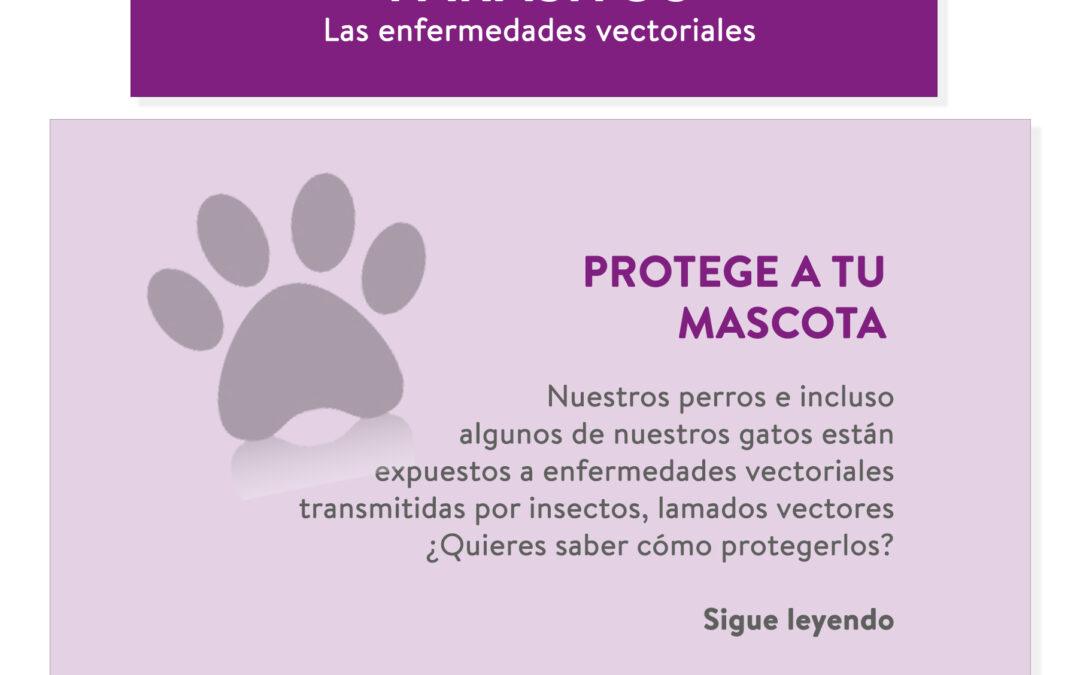 ¿Proteges a tu mascota de parásitos y enfermedades vectoriales?