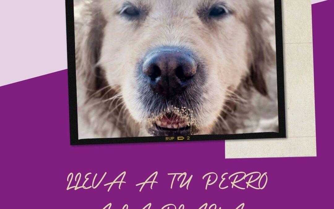 Playa para perros: Lleva a tu mejor amigo