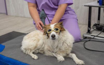 La movilidad de tu perro nos importa ¿y a ti?